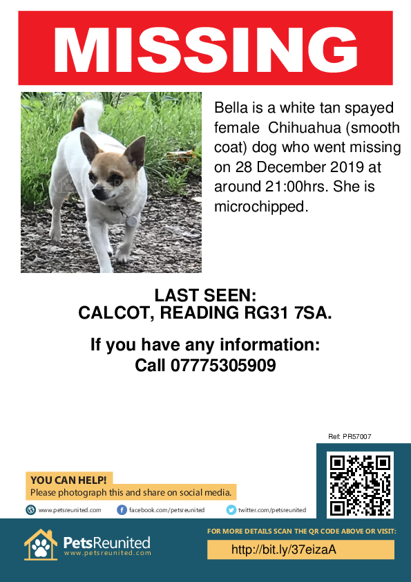 Lost pet poster - Lost dog: White tan Chihuahua (smooth coat) dog called Bella