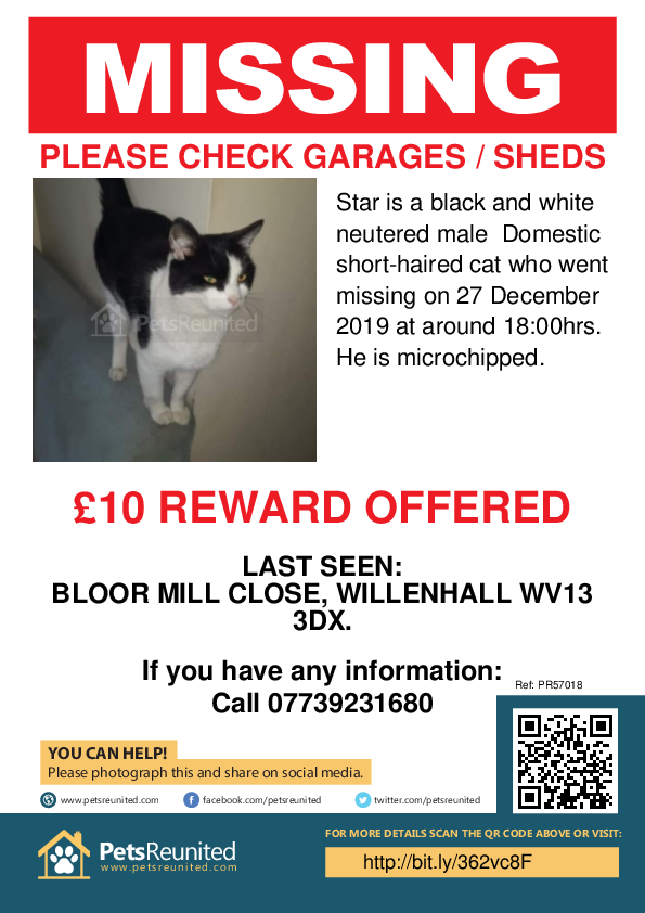 Lost pet poster - Lost cat: Black and white cat called Star