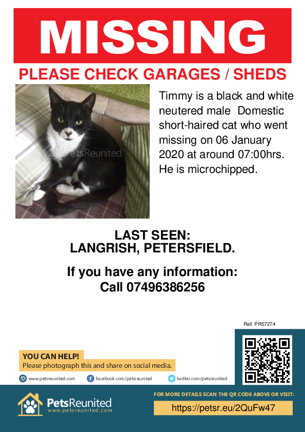 Lost pet poster - Lost cat: Black and white cat called Timmy