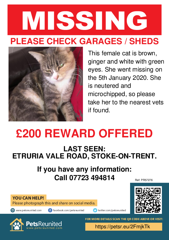 Lost pet poster - Lost cat: Brown, ginger and white cat [name witheld]