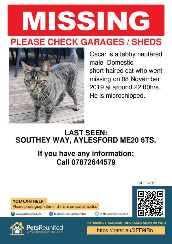Lost pet poster - Lost cat: Tabby cat called Oscar