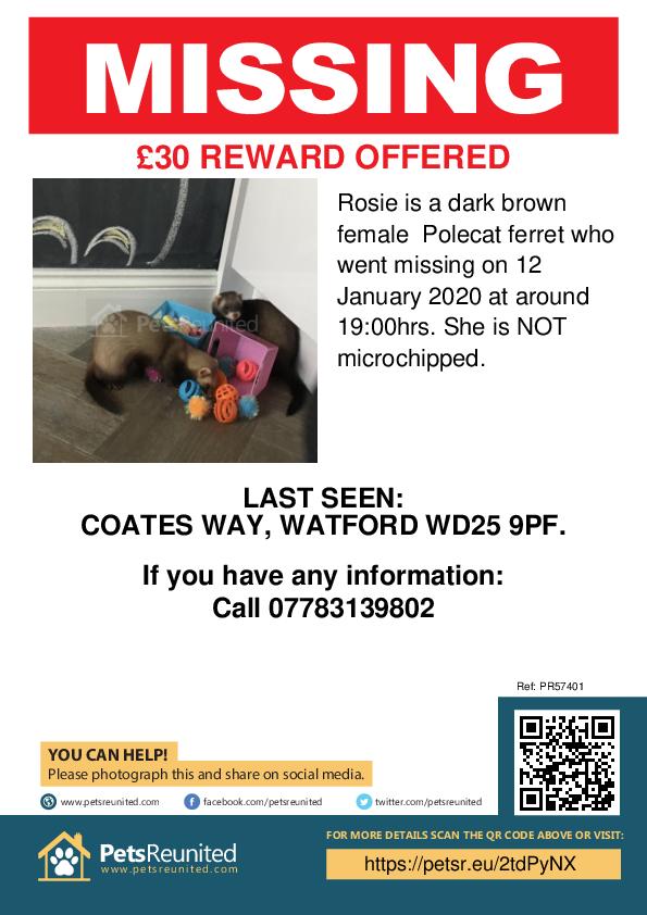 Lost pet poster - Lost ferret: Dark brown Polecat ferret called Rosie