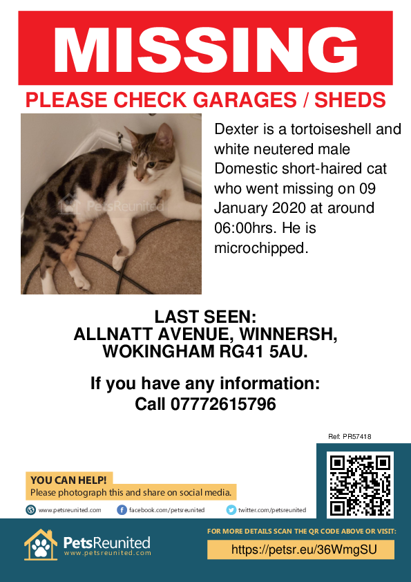 Lost pet poster - Lost cat: Tortoiseshell and white cat called Dexter