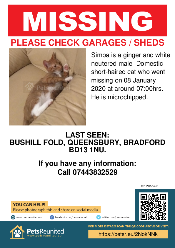 Lost pet poster - Lost cat: Ginger and white cat called Simba