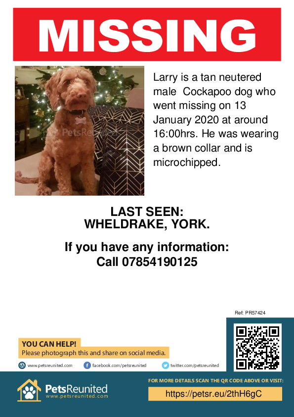Lost pet poster - Lost dog: Tan Cockapoo dog called Larry
