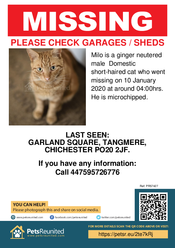 Lost pet poster - Lost cat: Ginger cat called Milo