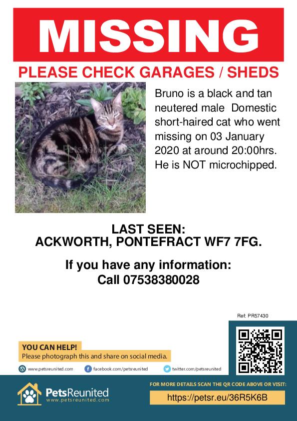 Lost pet poster - Lost cat: Black and tan cat called Bruno