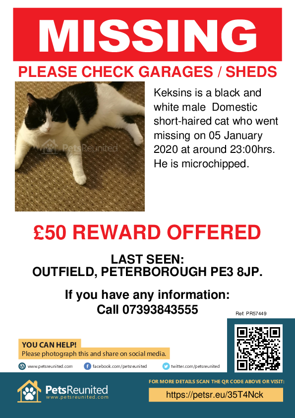 Lost pet poster - Lost cat: Black and white cat called Keksins