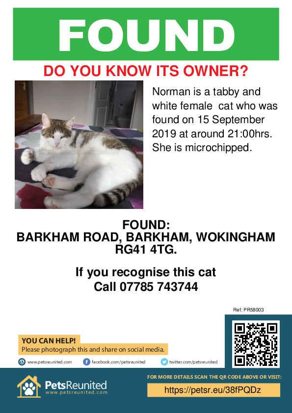 Found pet poster - Found cat: Tabby and white cat called Norman