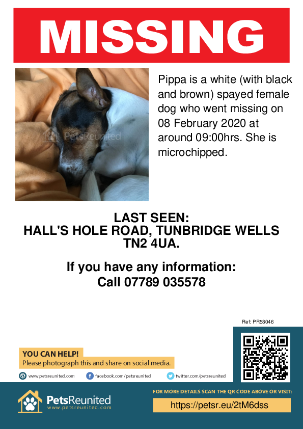 Lost pet poster - Lost dog: White (with black and brown) dog called Pippa