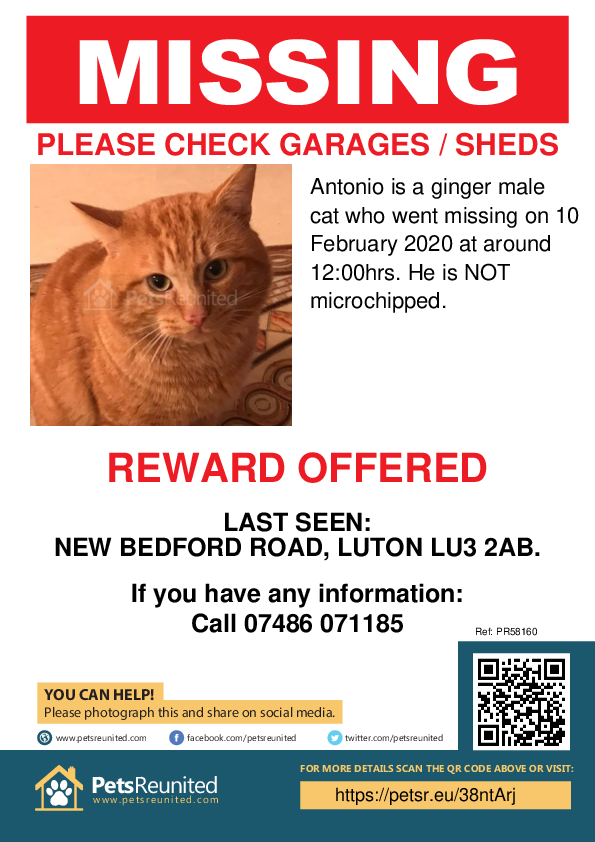 Lost pet poster - Lost cat: Ginger cat called Antonio