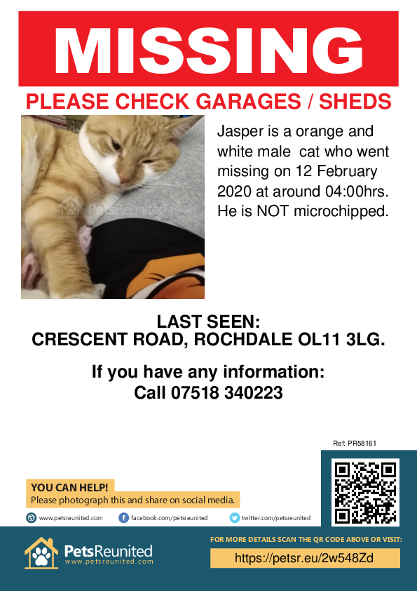 Lost pet poster - Lost cat: orange and white cat called Jasper