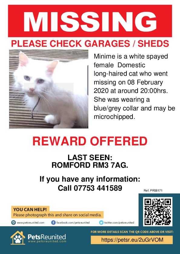 Lost pet poster - Lost cat: White cat called Minime