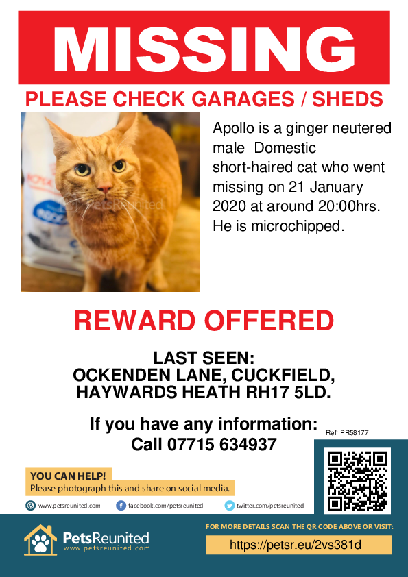 Lost pet poster - Lost cat: Ginger cat called Apollo