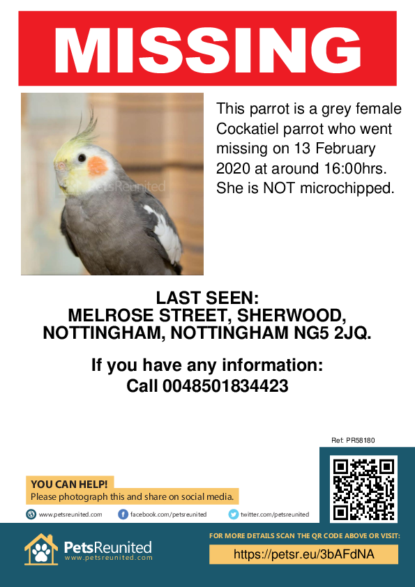 Lost pet poster - Lost parrot: Grey Cockatiel parrot [name witheld]