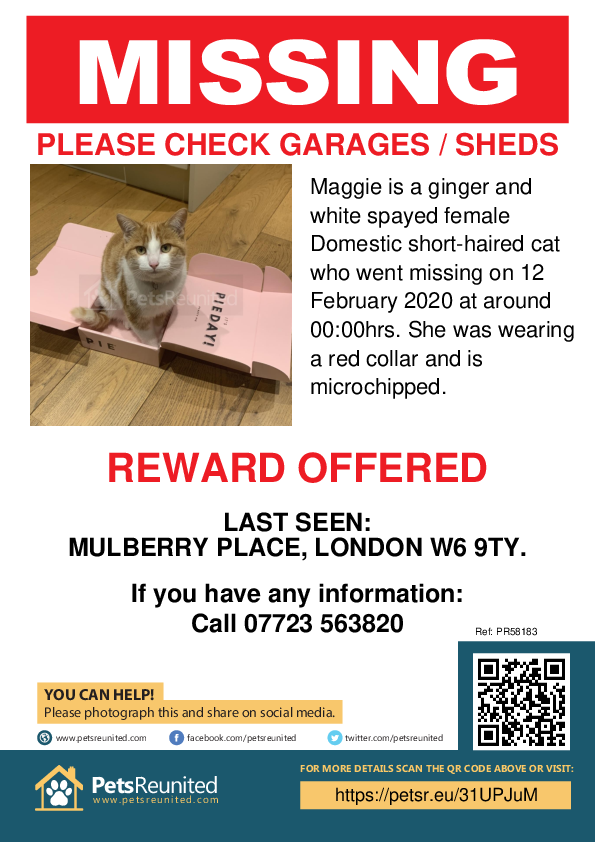 Lost pet poster - Lost cat: Ginger and white cat called Maggie