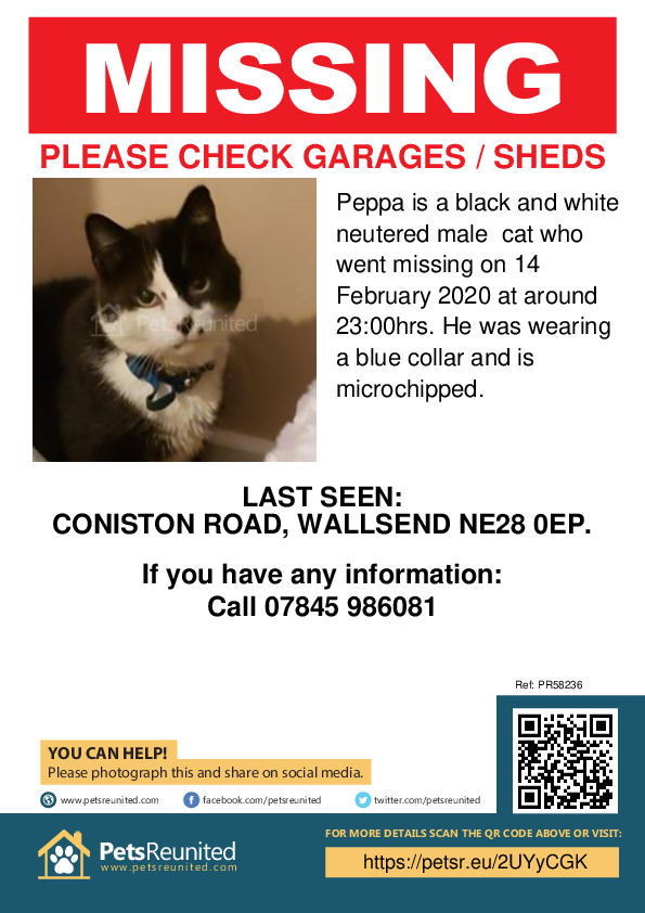 Lost pet poster - Lost cat: black and white cat called Peppa