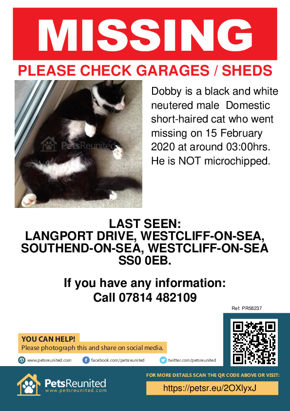 Lost pet poster - Lost cat: Black and white cat called Dobby