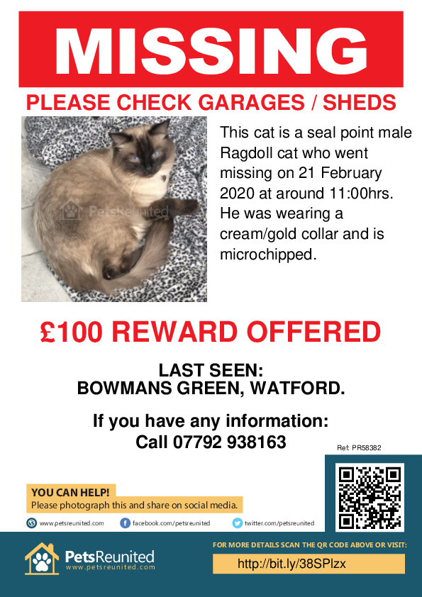 Lost pet poster - Lost cat: Seal point Ragdoll cat [name witheld]