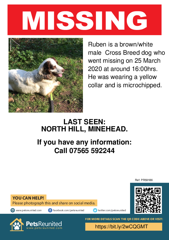 Lost pet poster - Lost dog: Brown/White dog called Ruben