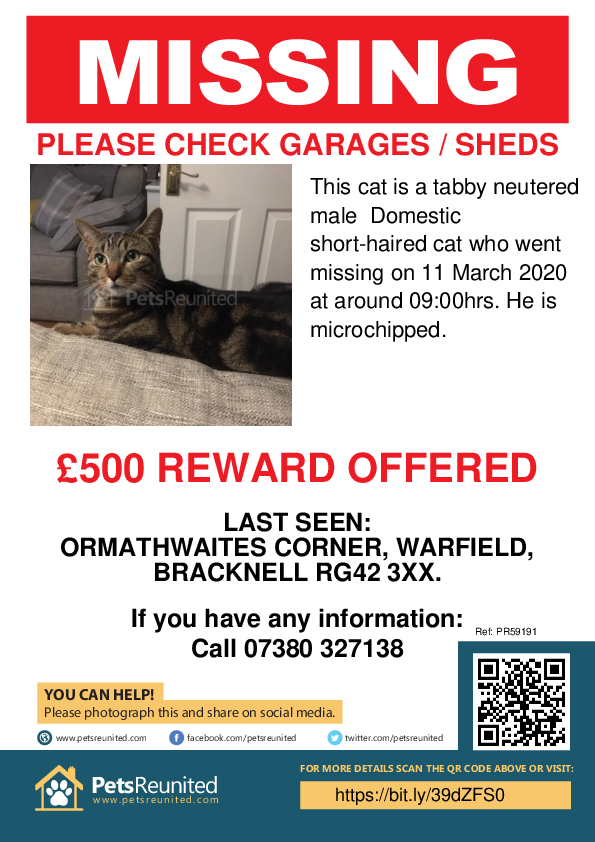 Lost pet poster - Lost cat: Tabby cat [name witheld]