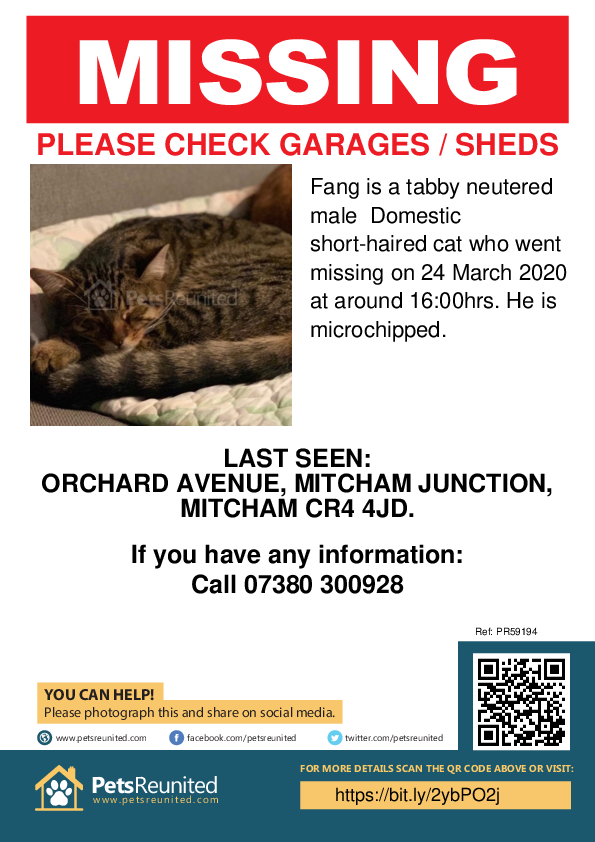 Lost pet poster - Lost cat: Tabby cat called Fang