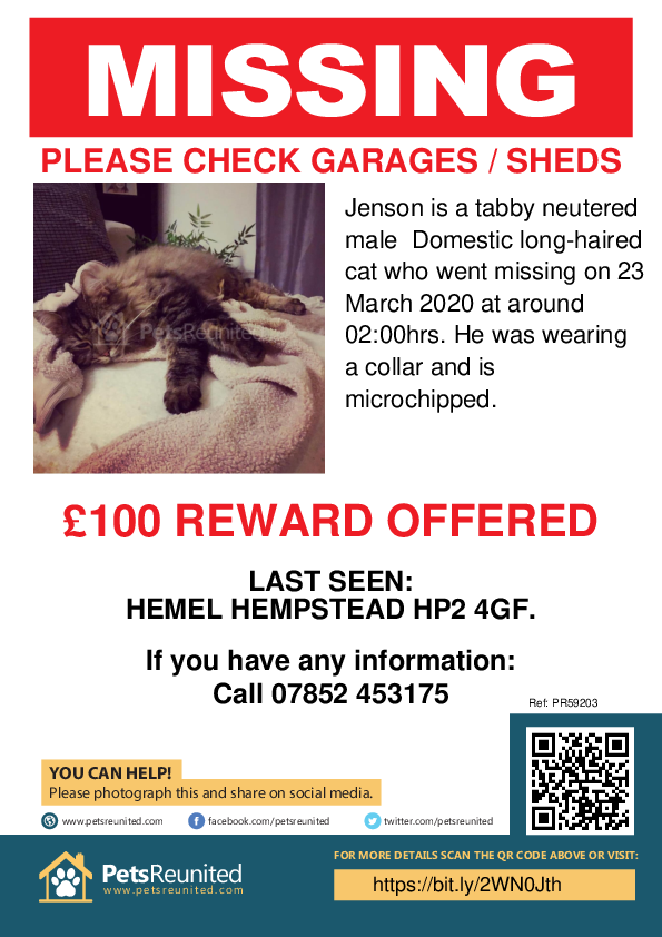 Lost pet poster - Lost cat: Tabby cat called Jenson