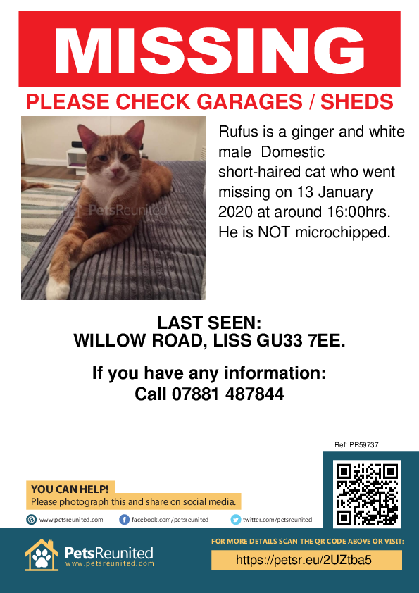 Lost pet poster - Lost cat: Ginger and white cat called Rufus