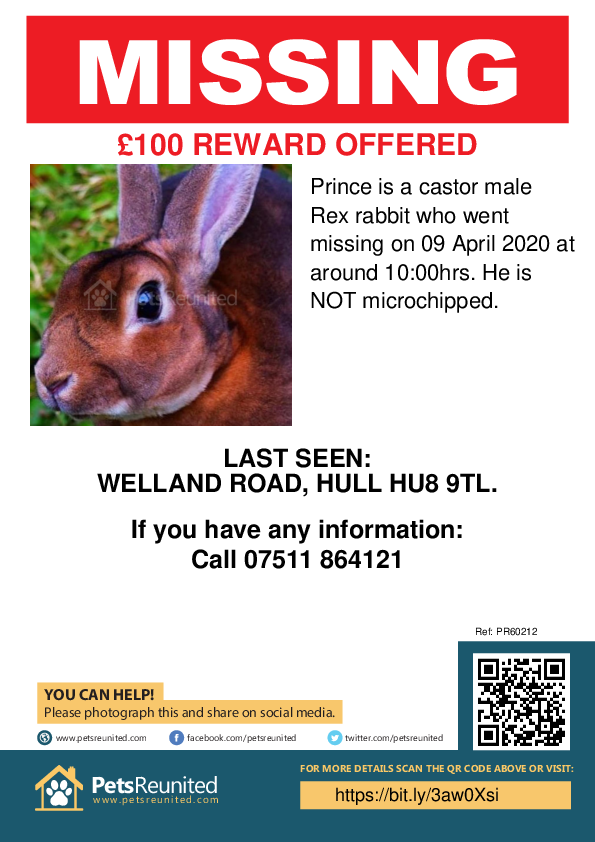 Lost pet poster - Lost rabbit: castor Rex rabbit called Prince