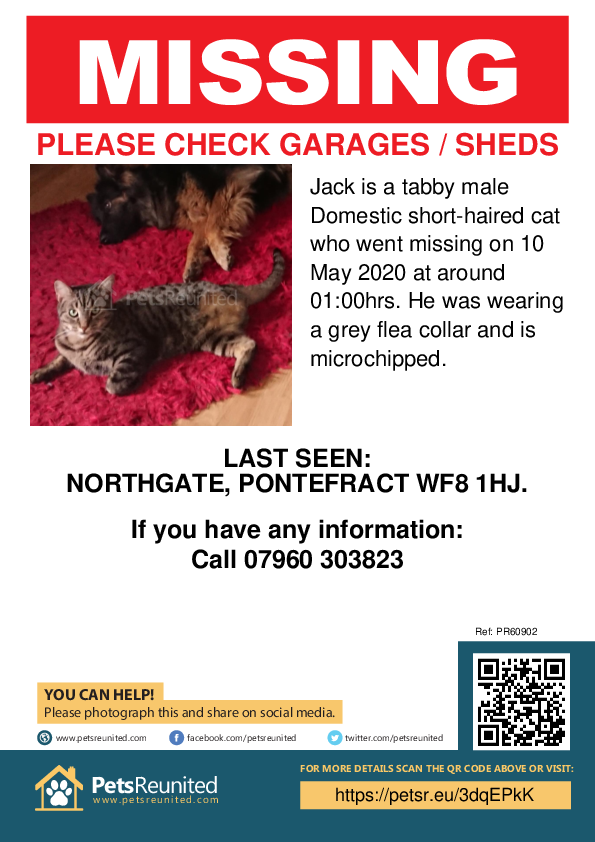 Lost pet poster - Lost cat: Tabby cat called Jack