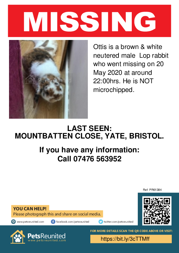 Lost pet poster - Lost rabbit: Brown & white Lop rabbit called Ottis