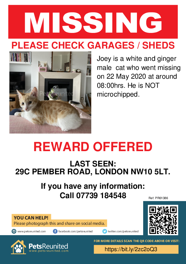 Lost pet poster - Lost cat: White and Ginger cat called Joey