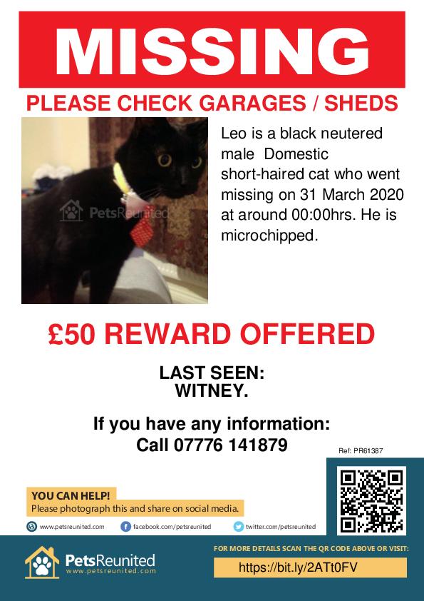 Lost pet poster - Lost cat: Black cat called Leo