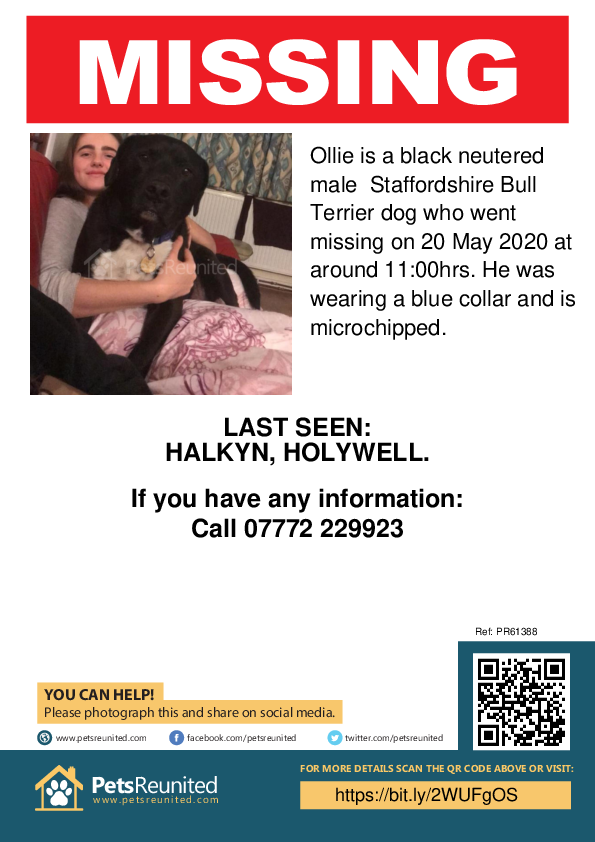 Lost pet poster - Lost dog: Black Staffordshire Bull Terrier dog called Ollie