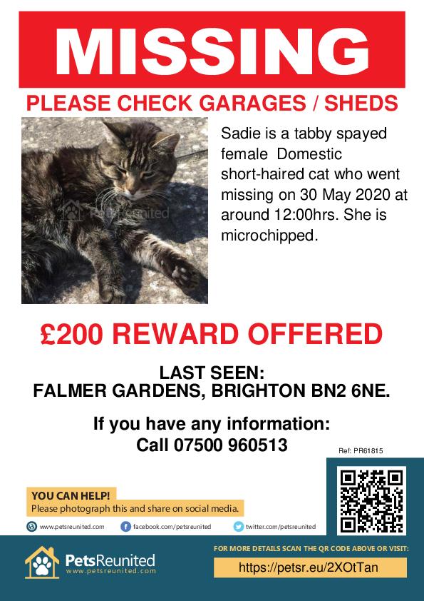 Lost pet poster - Lost cat: Tabby cat called Sadie