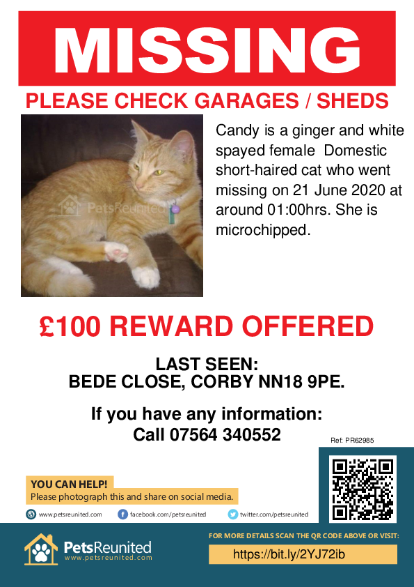 Lost pet poster - Lost cat: Ginger and white cat called Candy
