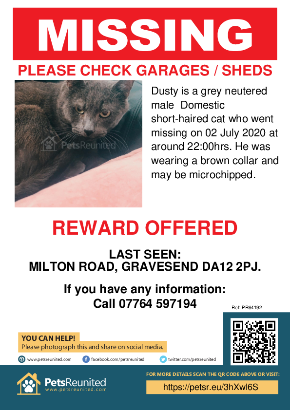 Lost pet poster - Lost cat: Grey cat called Dusty
