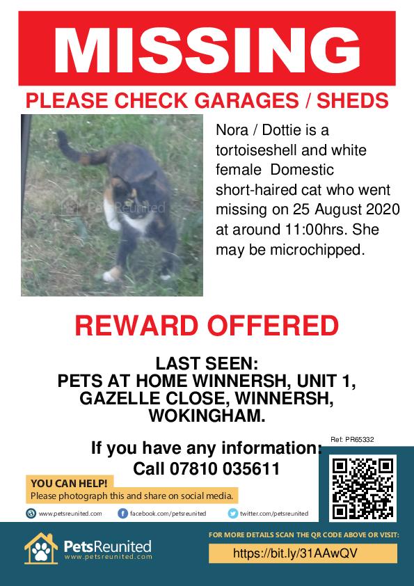 Lost Cat Tortoiseshell And White Cat Called Nora Dottie Wokingham Area Berkshire Petsreunited Com