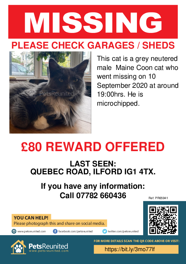 Lost pet poster - Lost cat: Grey Maine Coon cat [name withheld]