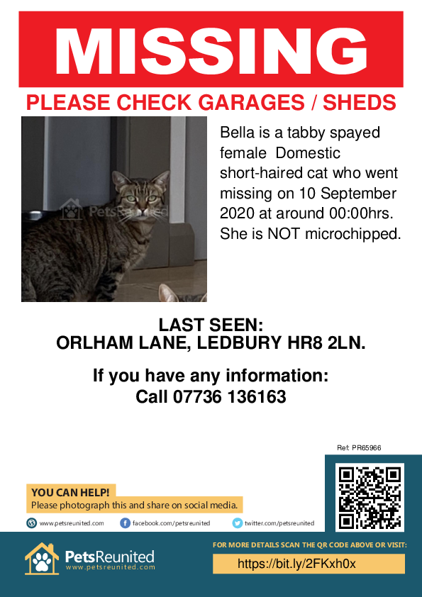 Lost pet poster - Lost cat: Tabby cat called Bella