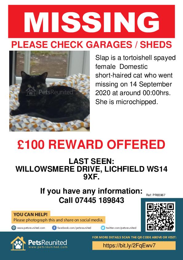 Lost pet poster - Lost cat: Tortoishell cat called Slap