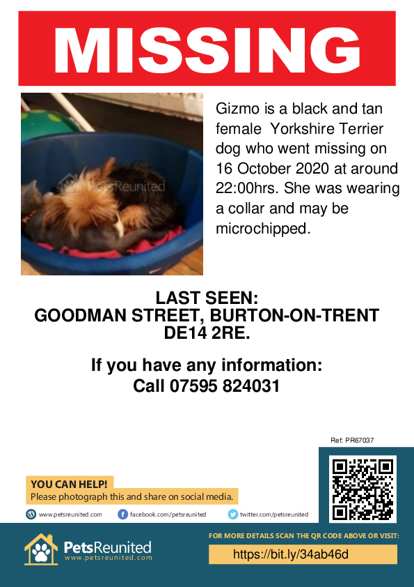 Lost pet poster - Lost dog: Black and Tan Yorkshire Terrier dog called Gizmo