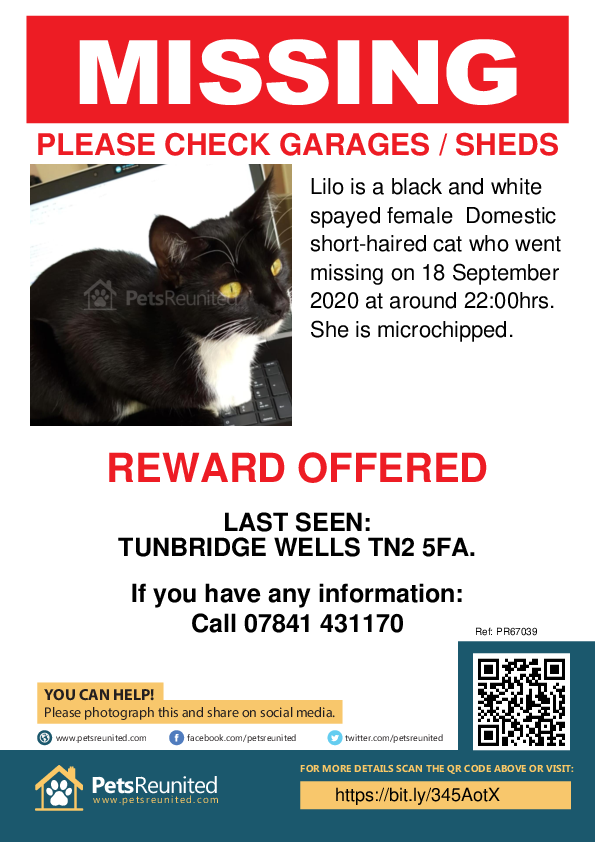 Lost pet poster - Lost cat: Black and white cat called Lilo