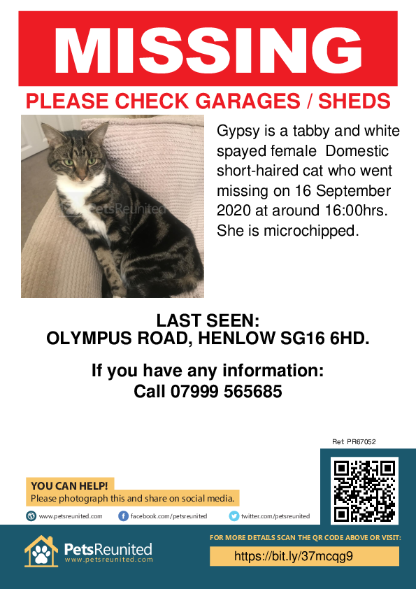 Lost pet poster - Lost cat: Tabby and white cat called Gypsy