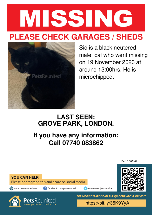 Lost pet poster - Lost cat: Black cat called Sid