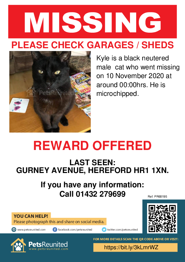 Lost pet poster - Lost cat: Black cat called Kyle