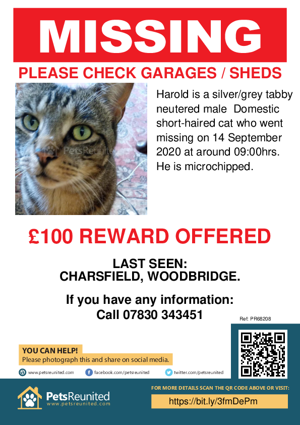 Lost pet poster - Lost cat: Silver/Grey Tabby cat called Harold