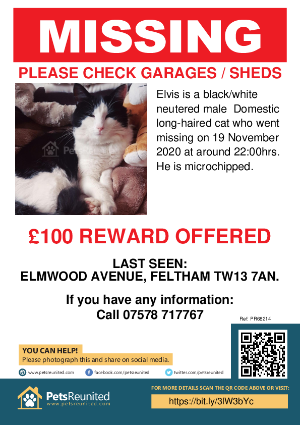 Lost pet poster - Lost cat: Black/White cat called Elvis