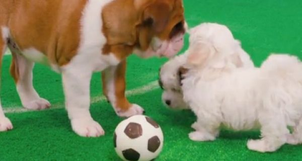Good and Bad PR: Freshpet scores a World Cup winner