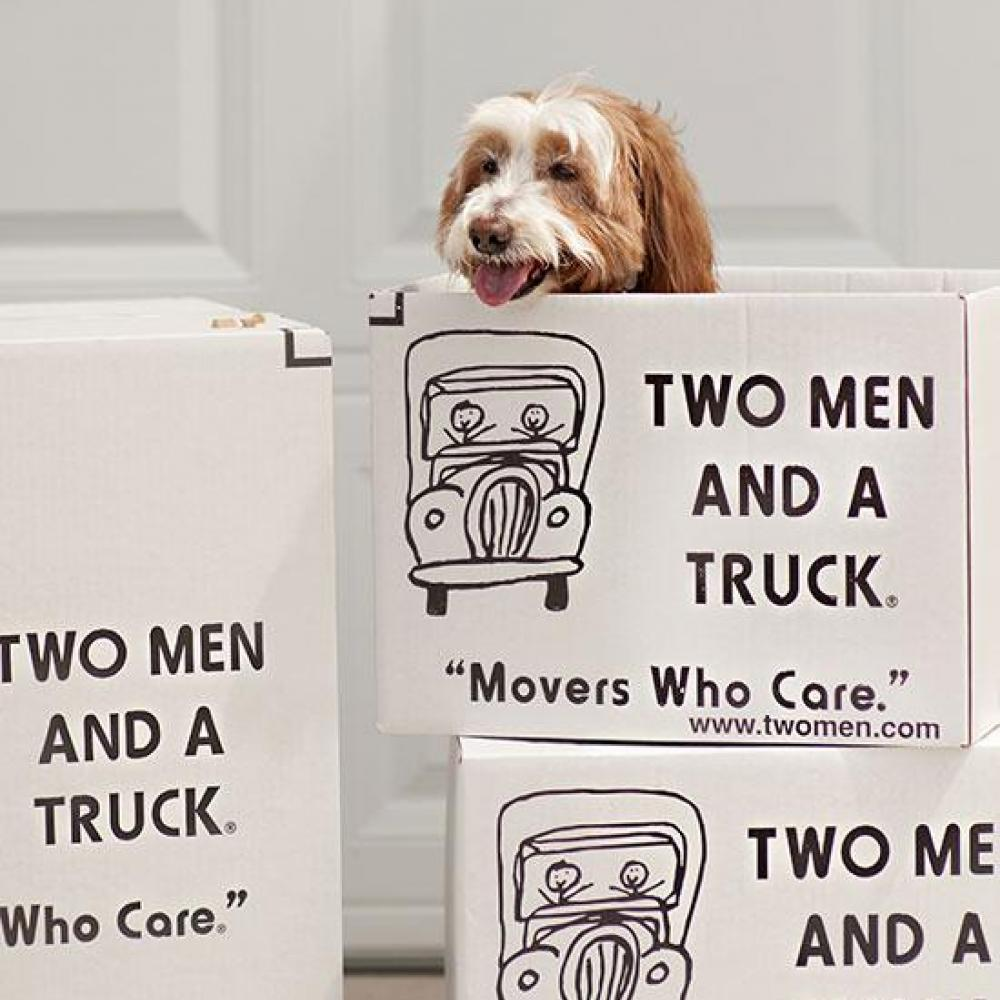 Happy Dog In A Moving Box